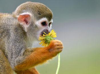беличьи обезьяны защитники инфоргород новости мир