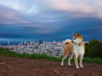 Начальник железнодорожной станции - собака. Япония. Инфогород. Мир